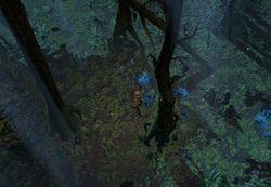 Западный лес (Акт 2) area screenshot.jpg