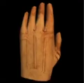 Alpha 2004 protective gloves.png