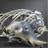 Coelodonta Rhino Bone Icon.png