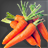 Carrot Icon.png