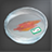Animal Cell Sample Icon.png