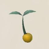 Peak Hip Seed Icon.png