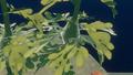 Seaweed underwater.png