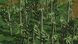 RO PayonForest.jpg