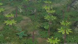 RO PapuchichaForest.jpg