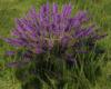 FlowersK.png