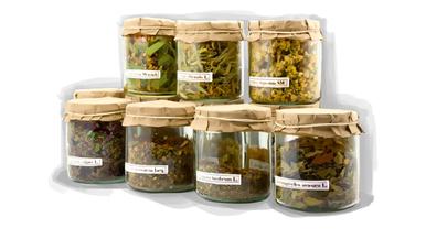 Basic Medicinal Herbs.jpg