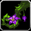 Icon - Orchid of Beauty.png