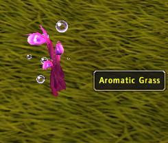 Aromaticgrass.JPG