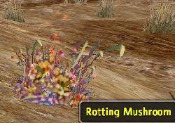 RottingMushroom.jpg