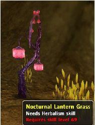 NocturnalLanternGrass.jpg