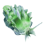 Green Power Slug.png