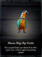 Macaw Bilge Rat Outfit.png