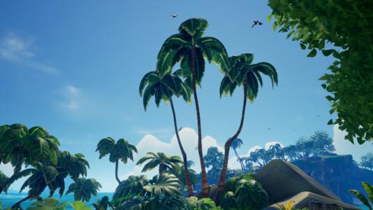 Three Tallest Palms