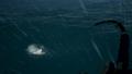 Shores Stormfish4.png