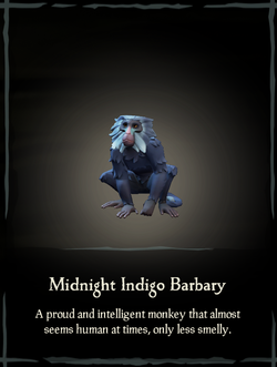Midnight Indigo Barbary.png