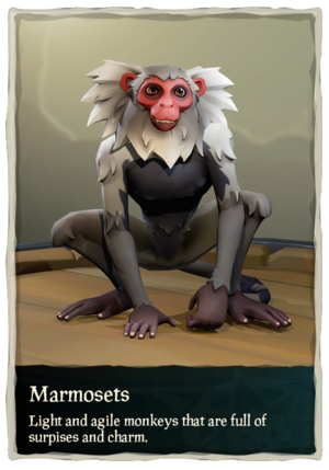 Marmosets.png