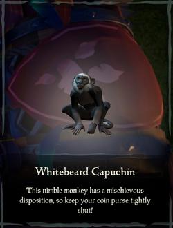 Whitebeard Capuchin.png