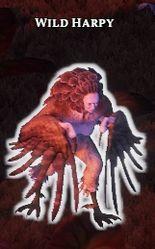 Wild Harpy
