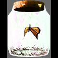 ButterflyinaJar.png