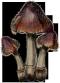 Illustration Bleedingcrown.png