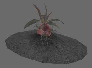 Aschsüßkartoffel im Boden