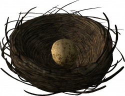 Hawk's nest with a Hawk's egg