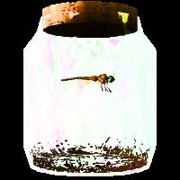 DragonflyinaJar.png