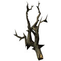 CanisRoot.png