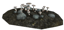 White Caps as they appear in caves