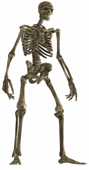 Skeletal remains.png