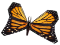 MonarchButterfly.png