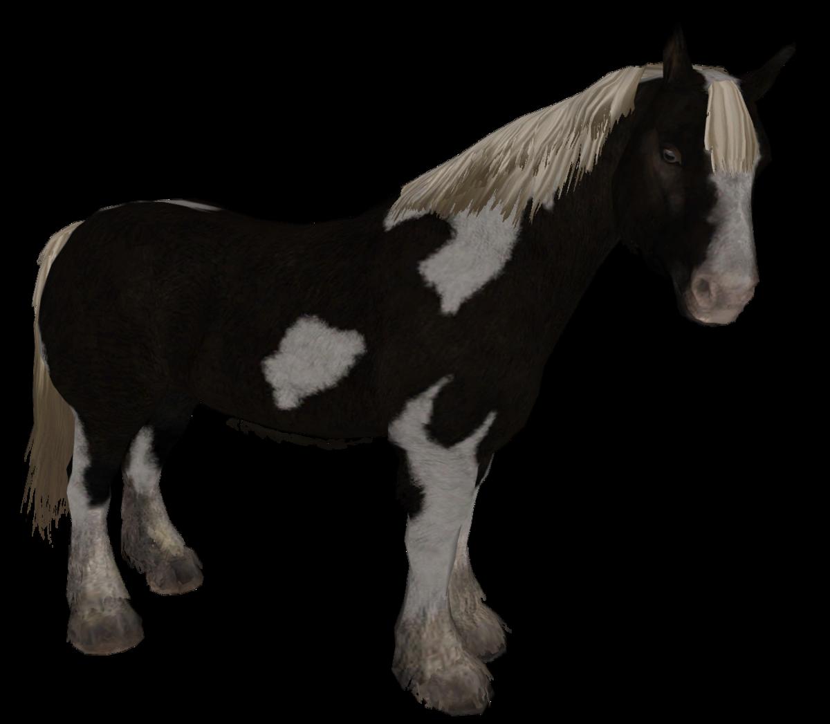 Horse - Skyrim Wiki