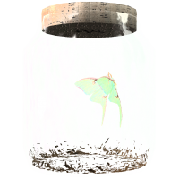 MothinaJar.png