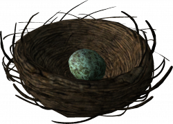 Bird's nest with a Rock Warbler egg