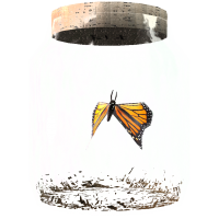 ButterflyinaJar.png