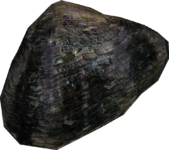 PearlOyster large.png