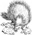 Echinops novels.png