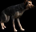 le chien d'Alvin