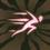 Dash Rune.png