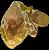 Af goldfish icon cop.png