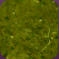 Grassypegbasepix.png