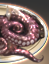 Klingon Octopus icon.png