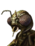 DOff Xindi Male 02 icon.png