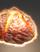 Bajoran Mapa Bread icon.png