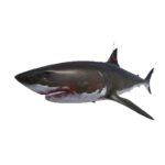 Boss Shark.png