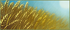 Wheat farming.png