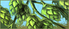 Hops farming.png