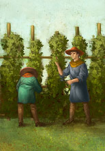 Advanced hops tending.jpg