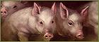 Animal husbandry.png